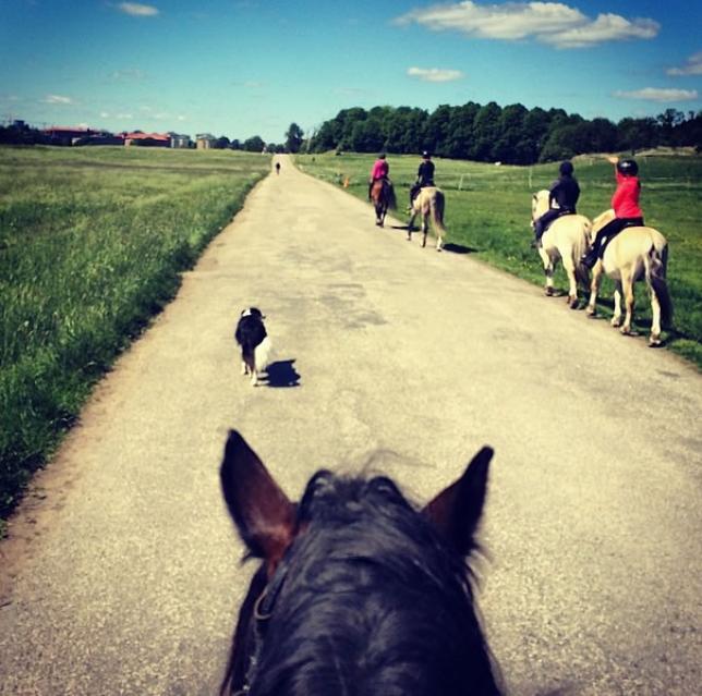 Hästutflykt