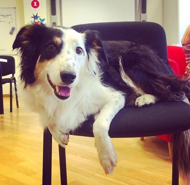 En av hundarna på skolan